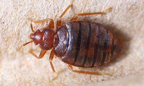 Bed Bug Control Aside Image