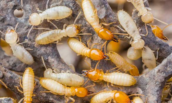 Termite Control Aside Image